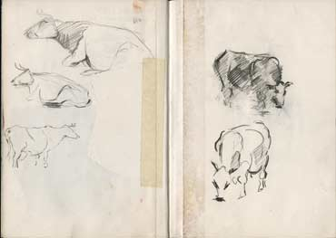 Sketchbook A5-02, 02. Line drawings, pencil (cows).