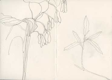 Sketchbook A5-06, 03. Line drawing, pencil (garden plants).